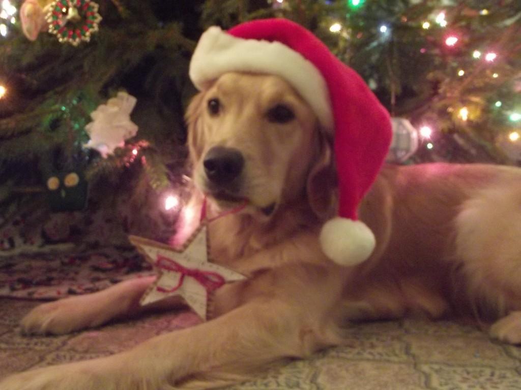 18 Christmas Pet Photo Ideas 1 More Than 2 1 More Than 2