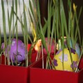 Easter Fun! Cat Grass and Easter Eggs make a great easy centerpiece.