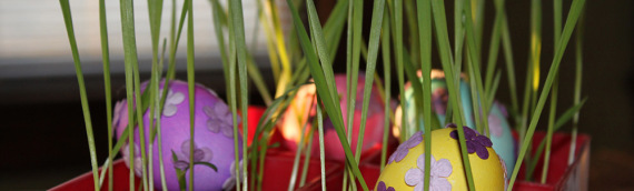 Easter Fun! Cat Grass + Easter Eggs = Easy Centerpiece