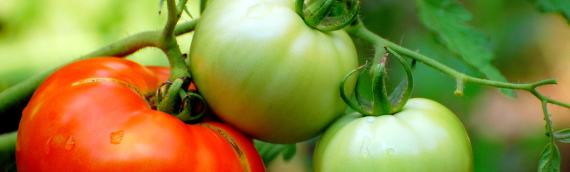Vegetable Garden – Planning Your Garden
