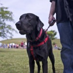 Dog at event with lots of mental stimulation