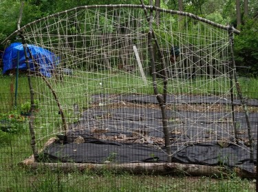 Building a trellis - the completed trellis.