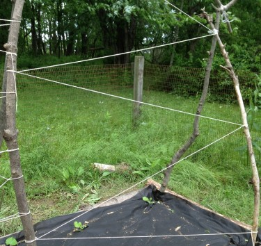 Building a trellis - wrap from side to side