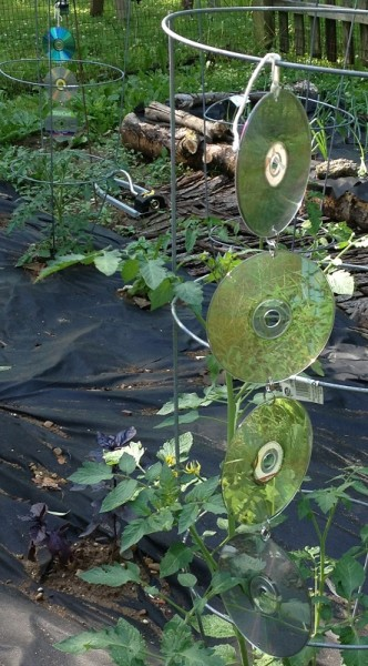 Reusing old CD's - Hang them in the garden to keep birds away from your plants.