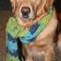 River and the Cozy Scarf - 1morethan2.com